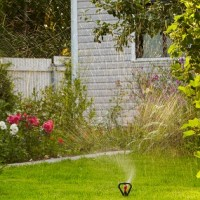 Energy Saving Tips for Your Garden